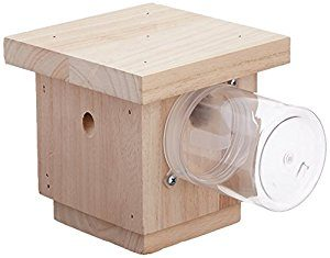 Bees N Things Carpenter Bee Trap review