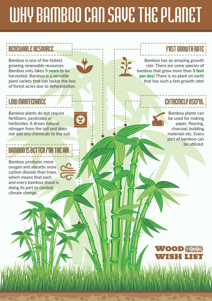 bamboo infographic darker